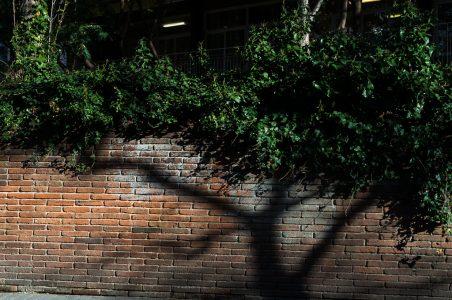 #21 – El árbol